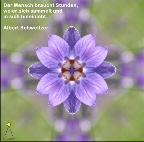 Albert Schweitzer Zitat