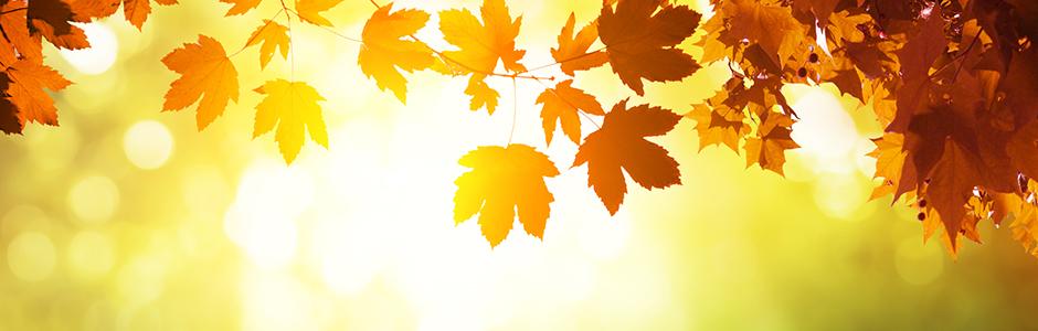 Meditas Partner - Sonne und Blätter im Herbst